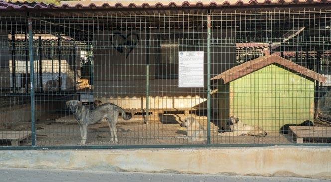Mersin Kaşlı'da 800 Köpek ve 550 Kedi Sahiplendirildi