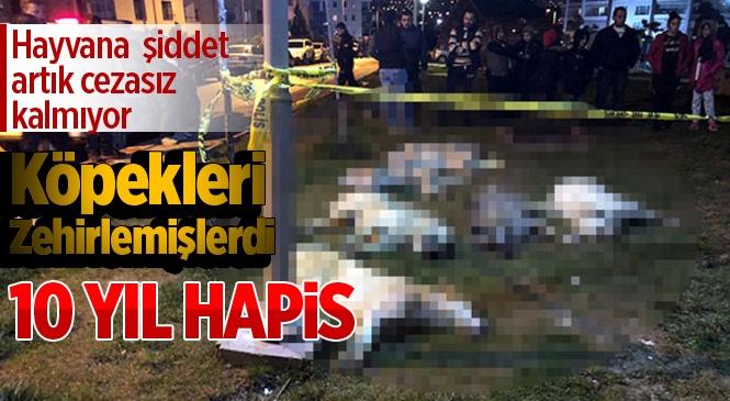 Ankara'daki Köpek Katliamında Sanıklara 10 Yıl Hapis Cezası İstendi