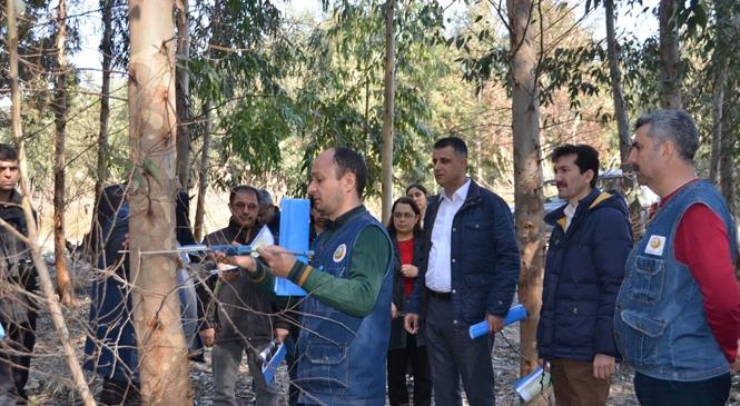 Mersin Orman Bölge Müdürü Akduman Okaliptüs Sahalarını İnceledi