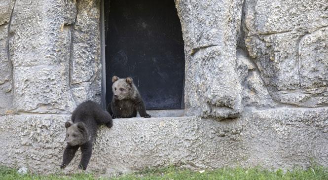 Fıstık ve Doğa, Tarsus Doğa Parkı'nın Sevimli İki Üyesi!Tarsus Doğa Parkı'nın Sevimli Üyeleri Anne Pakoş Ve Baba Ayıcan'ın Doğumla Gelen Çifte Mutluluğu