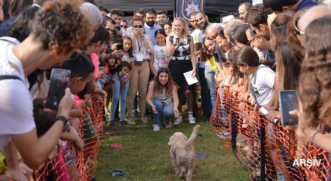 Mersin'de, Sokak Hayvanlarını Besleyecek Kişiler İçin Cuma Günü, Valilik Tarafından Duyurusu Yapıldı