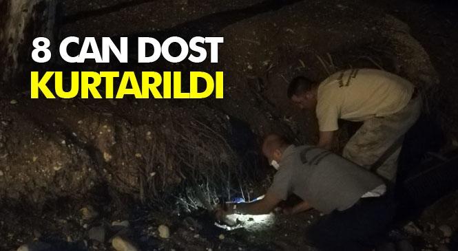Mersin'de Bir Ağacın Kökünden Anne Köpek ve 7 Minik Yavrusu Mersin Büyükşehir Belediyesi Ekiplerince Çıkarıldı