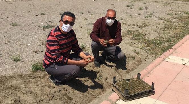Mersin Anamur'da Kum Zambaklarını Tüpleme Yöntemi İle Ektiler
