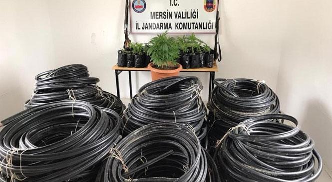 2 Bin 500 Metre Kablo Çalan Hırsızların Evinde Jandarma Tarafından 64 Kök Hint Keneviri Bitkisi Yakalandı