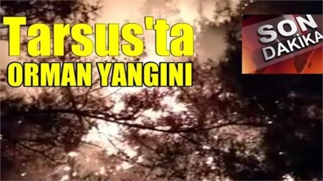 Mersin Tarsus'un Akçakocalı Mahallesi Yakınlarında Akşam Saatlerinde Orman Yangını Çıktı