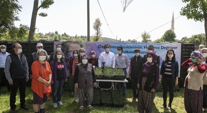 Mersin'in Mor Tarlalarından Güney'e Lavanta Kokusu Yayılacak! Mersin Büyükşehir'den Üreticiye 100 Bin Lavanta Fidesi Desteği