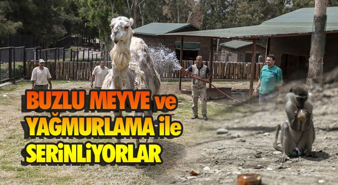 Mersin Tarsus Doğa Parkı'nın Sakinlerine Buzlu Meyve Karışımı ve Yağmurlama İle Serinletme
