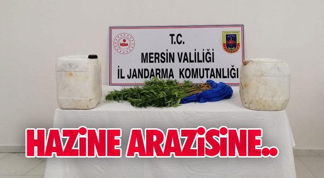 Mersin Silifke'de Hazine Arazisine Yasadışı Ekilmiş 73 Kök Hint Keneviri Bitkisi ve 30 Gram Kubar Esrar Ele Geçirildi