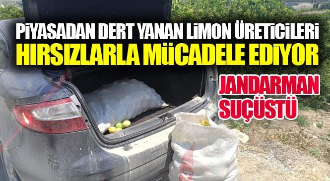 """Kiraladıkları Araçla Mezitli'deki Limon Bahçelerine Hırsızlığa Gelen """"Limon Hırsızları"""" Jandarma Ekiplerince Suçüstü Yakalandı"""