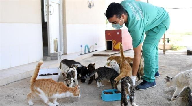 Hayvan Dostu Büyükşehir, 15 Ayda Merkezde 2 Bin 54, İlçe Bakımevlerinde 603 Canı Sıcak Yuvaya Kavuşturdu