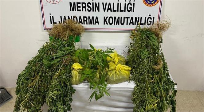 Mersin'de Evlerinde ve Ormanlık Alanda Yasadışı Kenevir Yetiştiren Şahıslara Operasyon