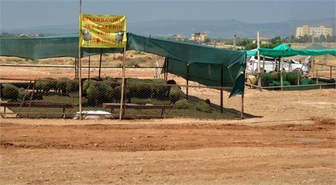 Yenişehir'de Kurbanlık Satış Alanları