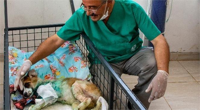 Mersin'de Son 7 Ayda 1580 Kedi ve Köpek Yaralanma İhbarı Ulaştı