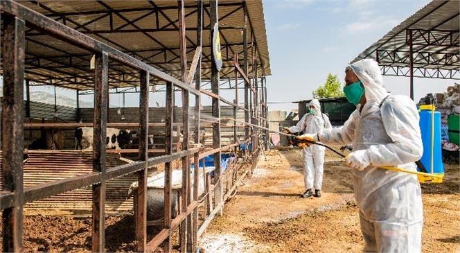 Hayvancılık Yapılan Bölgelerde İlaçlama Çalışmaları! Mersin Büyükşehir, Büyükbaş Hayvanlarda Görülen Üçgün Hastalığı İle İlgili Önlemlerini Alıyor