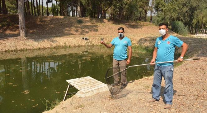 Mersin'de Sivrisinekle Mücadelede Biyolojik Çalışma! Mersin Büyükşehir, Sivrisinekle Mücadelede Lepistes Üretmeye Devam Ediyor
