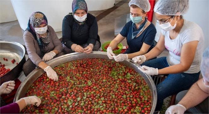 Mersin Büyükşehir'le Tarım Kalkınıyor, Üretici Kazanıyor! Tarım ve Hayvancılığa Can Suyu Mersin Büyükşehir'den