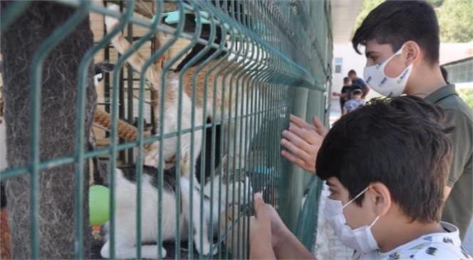Hayvanları Koruma Günü'nde 31 Patili Dost Yeni Yuvasına Kavuştu