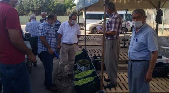 Mersin'in En Büyük Zeytin Üretim Merkezlerinden Biri Olan Tarsus'ta Zeytinde Hasadı Başladı