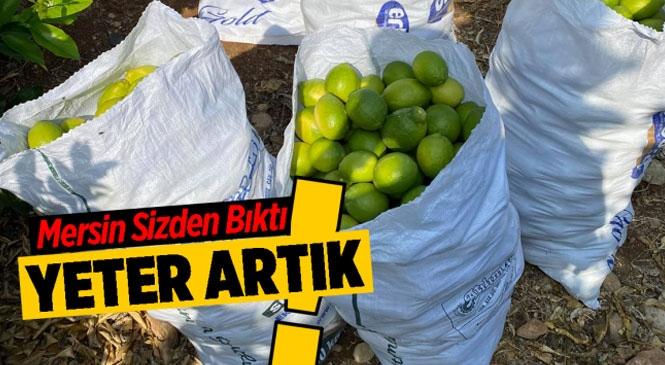 Limon Hırsızları Bahçe Sahiplerini Bıktırdı! Mersin Mezitli'de Hırsızlar Limon Çalarken Yakayı Ele Verdi