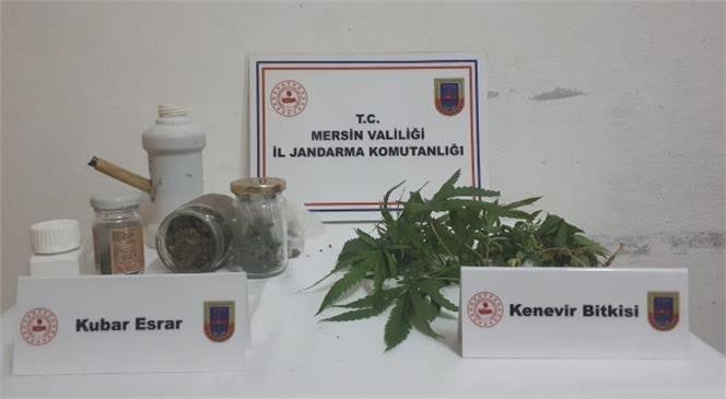 Jandarma Mersin Tarsus'ta Yasa Dışı Kenevir Eken Şahsı Yakalandı