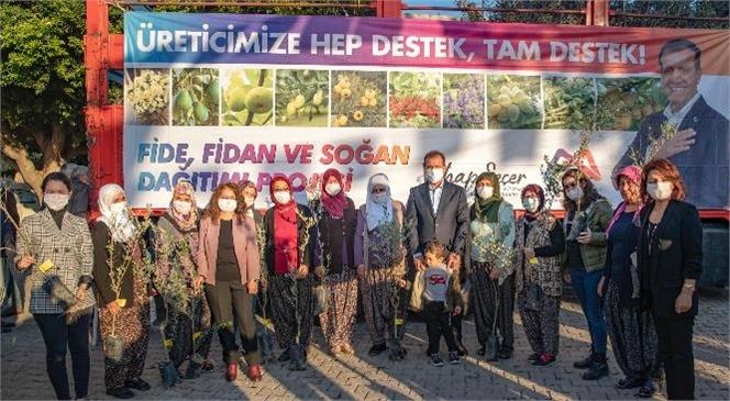 Zeytin Fidanı Dağıtımı Akdeniz'den Başladı! Mersin Büyükşehir'den Üreticilere Binlerce Zeytin Fidanı Desteği