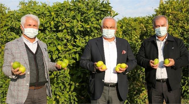 Mersin Erdemli'de Limon Hasadı Dualarla Başladı