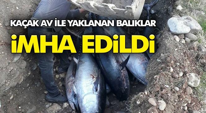 Mersin'de Kaçak Avlanan Orkinos Balıkları Ele Geçirildi