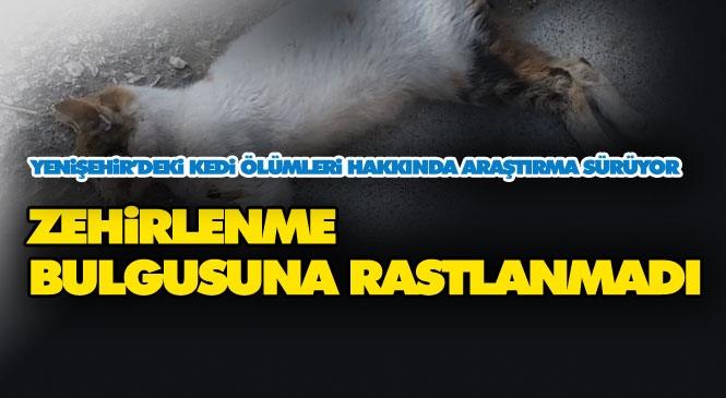 Mersin'de 15 Kedinin Ölümü İle İlgili Tarım İl Müdürlüğünün Başlattığı Çalışmada Zehir Bulgusu Bulunmazken Araştırmalar Devam Ediyor
