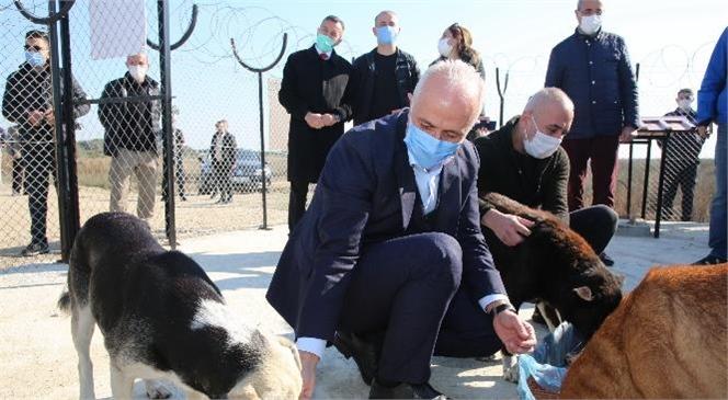 Akdeniz Belediyesi, Adanalıoğlu Sahilinde Yaşayan Sokak Hayvanları İçin Korunaklı Bir Alan Yarattı
