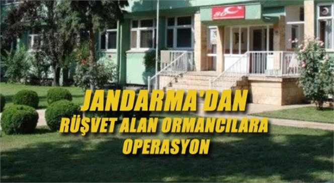 Tarsus'ta Jandarma'dan Rüşvet Alan Ormancılara Operasyon