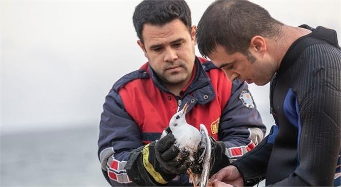 Mersin'de Ekipler, Hem Martıyı Hem de Martı İçin Gelen Tekneyi Kurtardı