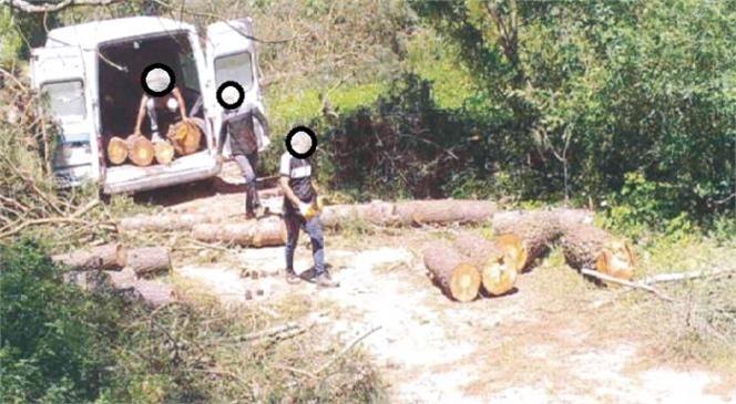 Fotokapanlar Ormanları Korumaya Devam Ediyor