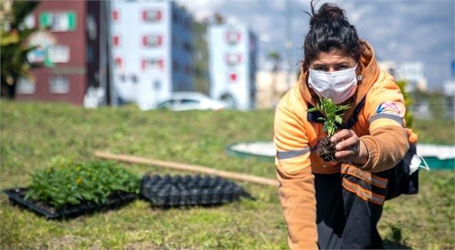 Mersin'e Bu Yıl 2 Milyon Mevsimlik Bitki Dikilmesi Planlanıyor
