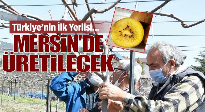 Mersin'de Tarımsal Kalkınma İçin Önemli Adım, 'İlkaltın Kivi' Çeşidinin Üretimi İçin Çalışmalar Başlatıldı