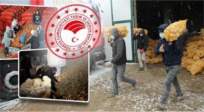 Üreticilerden Patates ve Soğan Alımına Başlandı
