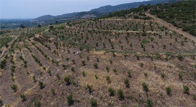 8.208 Köyde 28 Milyon Gelir Getirici Tür Fidanı Toprakla Buluştu