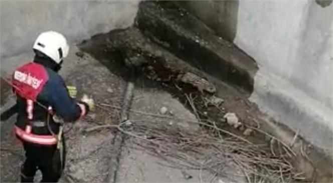 Tarsus'ta Boş Sulama Havuzuna Düşen Yavru Domuz İtfaiye Ekiplerince Kurtarıldı