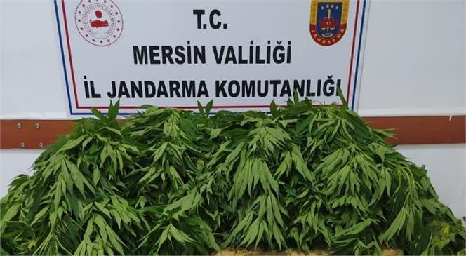 Mersin Gülnar'da Sebze, Meyve Fidanı Yetiştirilen Alanda 84 Kök Kenevir Bitkisi Ele Geçirildi