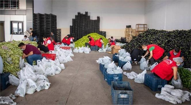 Mersin Büyükşehir Sayesinde 90 Ton Sebze Çiftçinin Tarlasında Çürümedi
