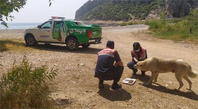 Çevre, Doğa ve Hayvanları Koruma Timince Mersin'de Sokak Hayvanlarını Beslendi