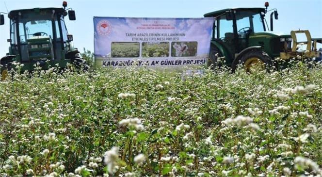 Tarsus İlçe Tarım ve Orman Müdürlüğünce Hazırlanmış Olan 'Karabuğdayla Ak Günler' Projesi Hayata Geçirildi