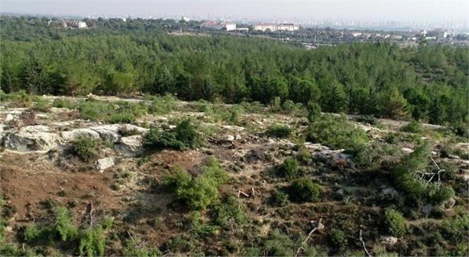 Orman Genel Müdürlüğü Geçici ve Daimi İşçi Alım İlanı