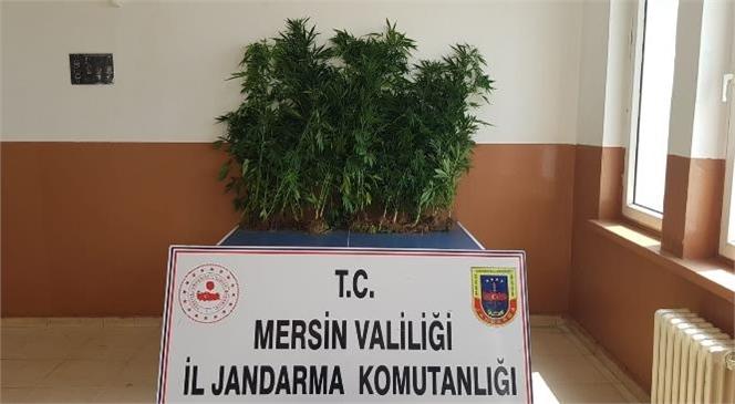 Mersin'de Yasadışı Kenevir Ekenlere Yönelik 4 Ayrı Operasyon Düzenlendi