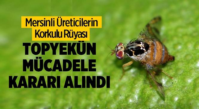 Akdeniz Meyve Sineğiyle Mücadelede Topyekün İlaçlama Kararı Alındı! Tarsus İlçe Tarım ve Orman Müdürlüğü'nden Açıklama Var