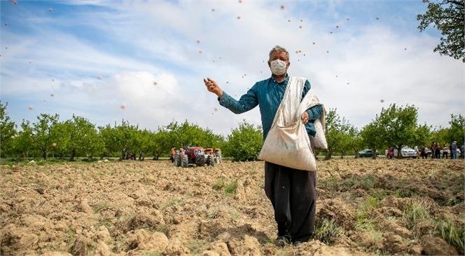Mersin Büyükşehir Destekledi, Gülnar'da Nohut Tohumları Toprakla Buluştu