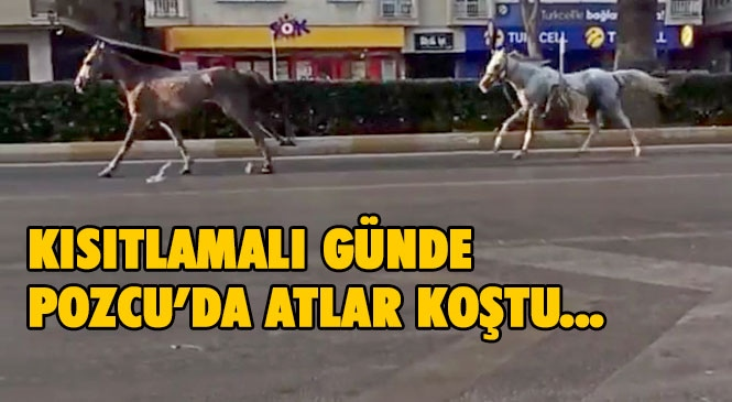 Mersin'de Kısıtlamalı Pazar Günü Boş Caddeler, İplerinin Çözülmesiyle Kaçtıkları Düşünülen Başıboş Dolaşan Atlara Kaldı