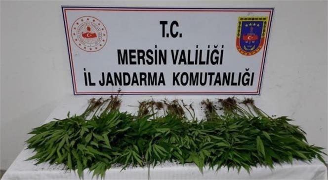 Mersin İl Jandarma Komutanlığı Uyuşturucu Tacirlerine Göz Açtırmıyor