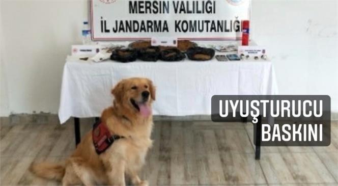 Jandarmadan Erdemli ve Tarsus'ta Yasa Dışı Kenevir Operasyonu