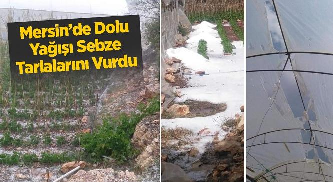 Mersin'in Erdemli İlçesinde Yaylalık Mahallelerde Etkili Olan Dolu Yağışı Tarım Alanlarına Zarar Verdi