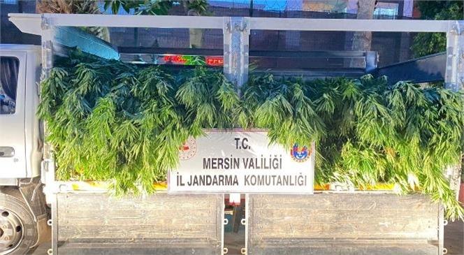 Mersin Erdemli'de Yasa Dışı Kenevir Operasyonu